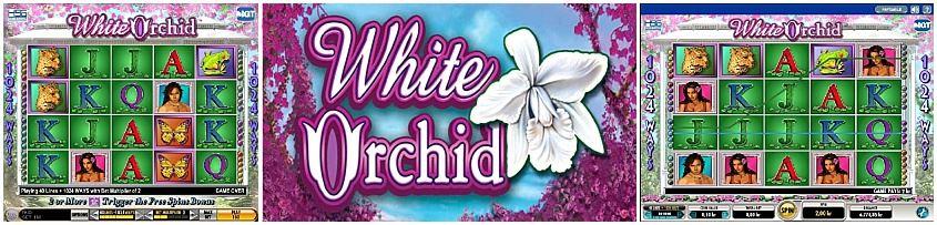 Jouez A White Orchid Gratuitement Bandit Manchot